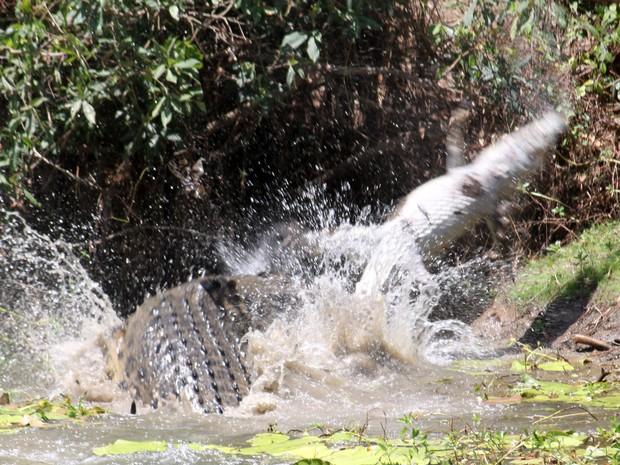 Fotos impressionantes foram tiradas no Parque Nacional Rinyirru, no norte do estado (Foto: Sandra Bell/AP)