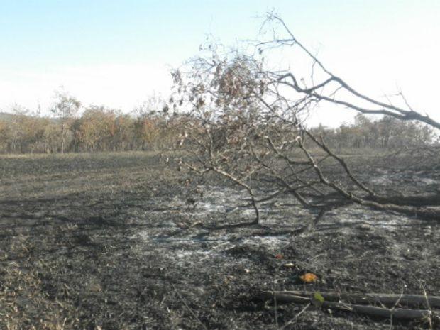 Fogo também atingiu uma área de preservação ambiental (Foto: Divulgação/ 15º BPMA)