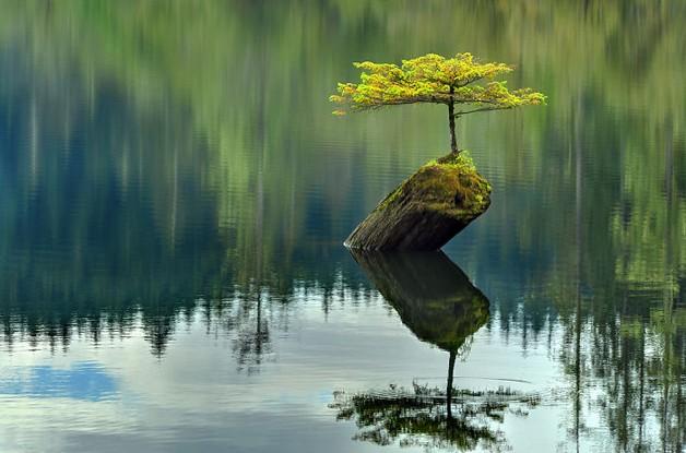 Esta árvore sobreviveu neste pequeno tronco de madeira (Foto: Reprodução)
