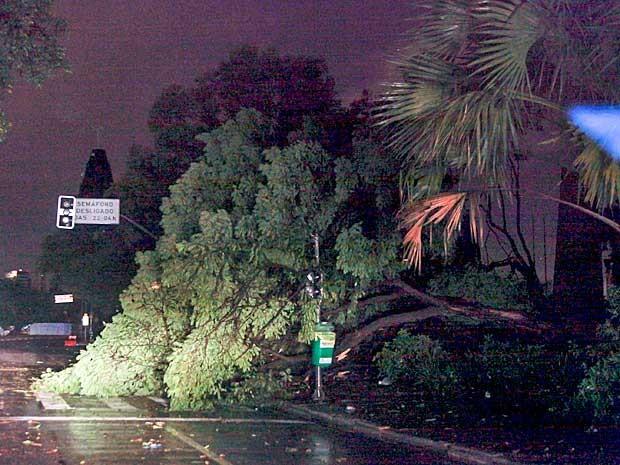 Árvore caída em frente ao Parque Ibirapuera, Zona Sul de São Paulo, após temporal atingir a cidade. (Foto: Ale Frata / Agência O Dia / Estadão Conteúdo)