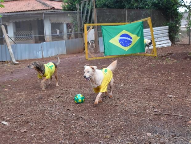 Cães de ONG em Piracicaba disputam partida de futebol (Foto: Thomaz Fernandes/G1)