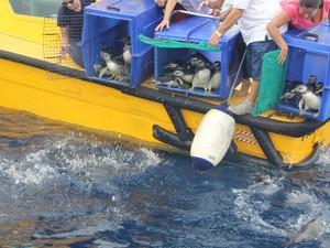 Animais foram soltos próximo a Costa para voltar ao local de origem (Foto: Divulgação/Prefeitura do Guarujá)
