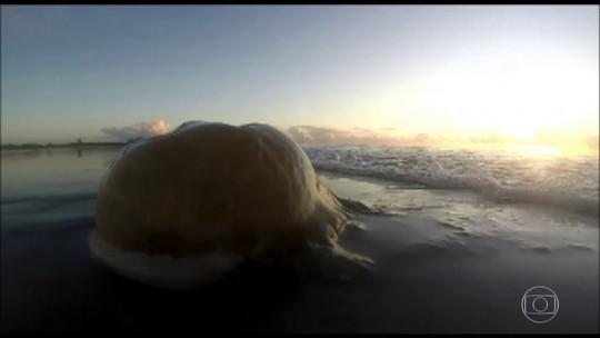 Acidentes com animais marinhos nas praias brasileiras; Bem Estar explica como se proteger
