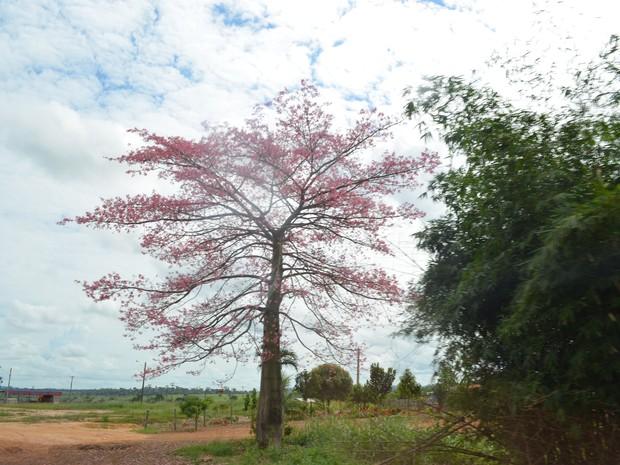 O tempo na Zona da Mata deve variar com períodos de sol e chuva (Foto: Rogério Aderbal/G1)