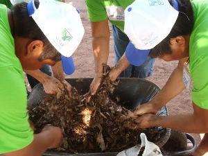 Senar/MS está capacitando indígenas de Caarapó para produzir mandioca (Foto: Divulgação/Senar/MS)