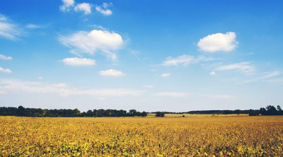 A DowDuPont será dividida em três empresas distintas, uma delas com foco em agricultura (Foto: Pexels)