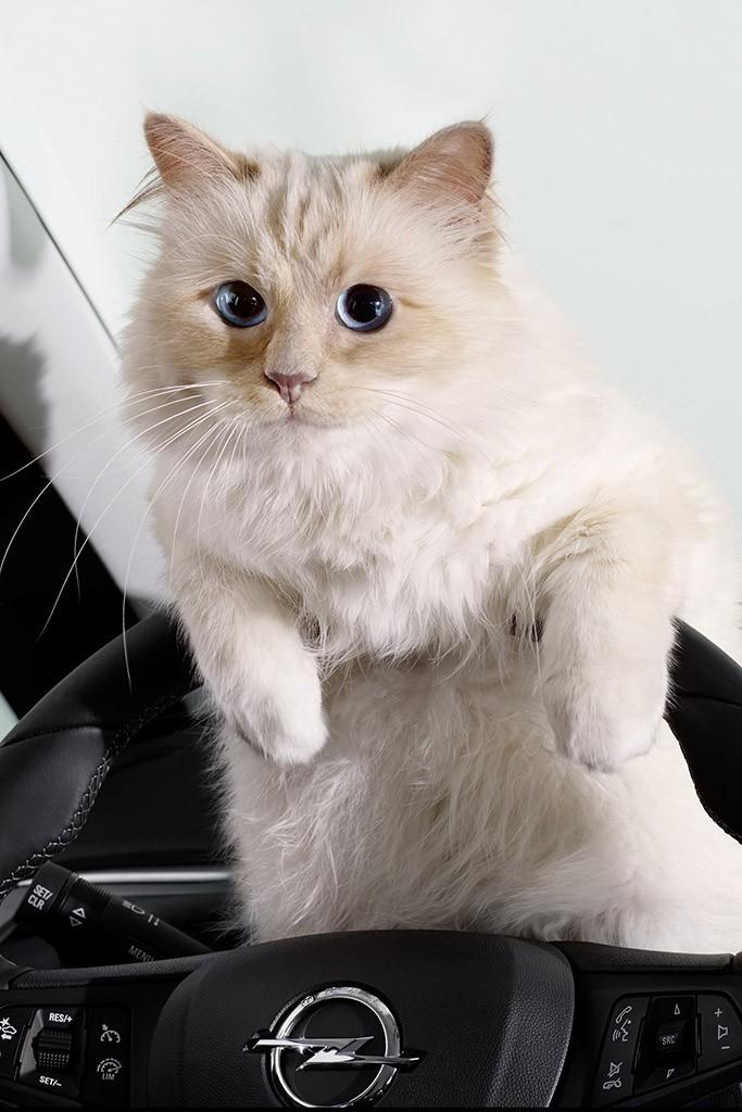 Choupette, gata de Karl Lagerfeld, estrela calendário de ...