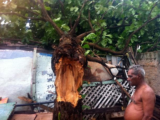 Árvore cai em casa de idoso em Cuiabá 3 (Foto: Marcelo Ferraz/G1)