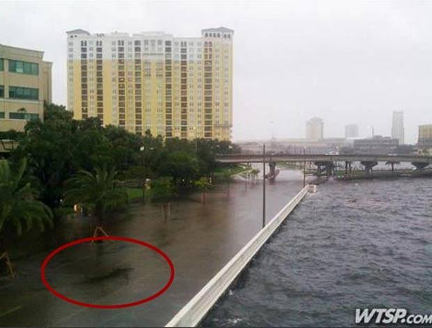 Foto falsa que mostra um tubarão em uma estrada beira-mar alagada. (Foto: Reprodução)
