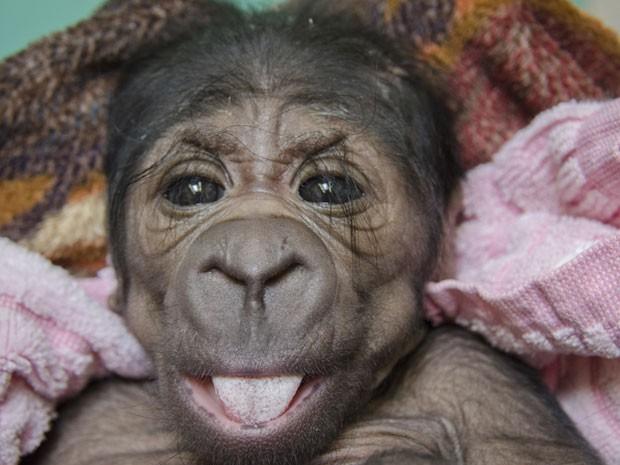 Filhote do sexo feminino nasceu saudável no último sábado no zoo de Oklahoma (Foto: Oklahoma City Zoo/Dr. Jennifer D'Agostino/AP)