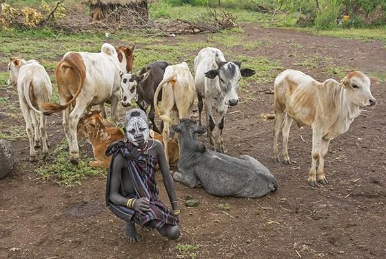 Um menino toma conta de bezerros – para os mursis, o gado é o foco de toda a atenção (Foto: © Haroldo Castro/ÉPOCA)