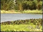 Após 'cachoeira de caramelo', Tem Notícias mostra situação de rio