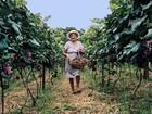 Confira a programação dos três dias da 9ª Festa do Vinho de Piracicaba