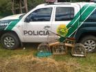 Polícia Ambiental apreende pássaros silvestres e materiais para caça no PR