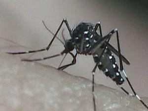 Agentes de Araraquara intensificam ações de combate ao Aedes aegypti (Foto: Reprodução EPTV)