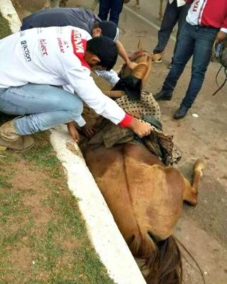 cavalor é puxado por participantes durante Cavalgada (Foto: Associação Patinha Carente )