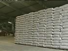 Criadores do Nordeste sofrem com a escassez de milho para as criações