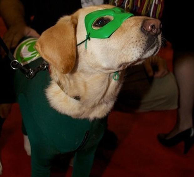 daa84e0ec8fa1d G1 - Site reúne 'cão Thor' e outros super-heróis caninos - notícias ...