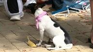 Outubro Rosa: gatas e cadelas passam por exames em Alegre