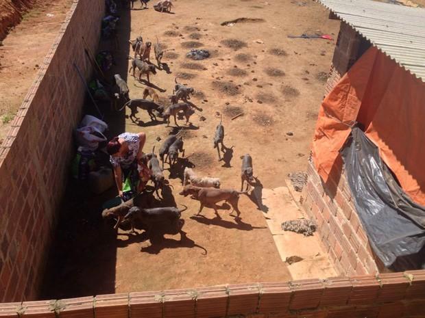 Cachorros sobreviviam com a água da chuva e restos mortais de outros cães, segundo Ademape (Foto: Kety Marinho/TV Globo)