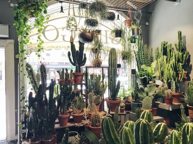 Roteiro pela Escandinávia para os apaixonados por plantas (Foto: Divulgação)