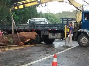Bombeiros e DER foram acionados para a retirada da árvore caída na rodovia Mogi-Guararema nesta sexta (2) (Foto: Fábio Santos/ Arquivo Pessoal)