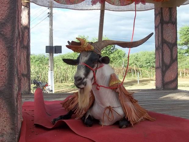 A grande estrela da festa de Cabaceiras (Foto: Taiguara Rangel/G1)
