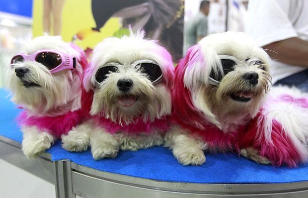 Estilosos, três cães foram fotografados usando óculos de sol durante uma  feira de animais de 2838340461