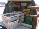 PRF apreende drogas, mercadorias de contrabando e camarões em SC