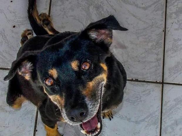 Tody é deficiente e está sob os cuidados da ONG Proteger. Ele não tem movimento nas patas traseiras. (Foto: Divulgação/ONG Proteger)