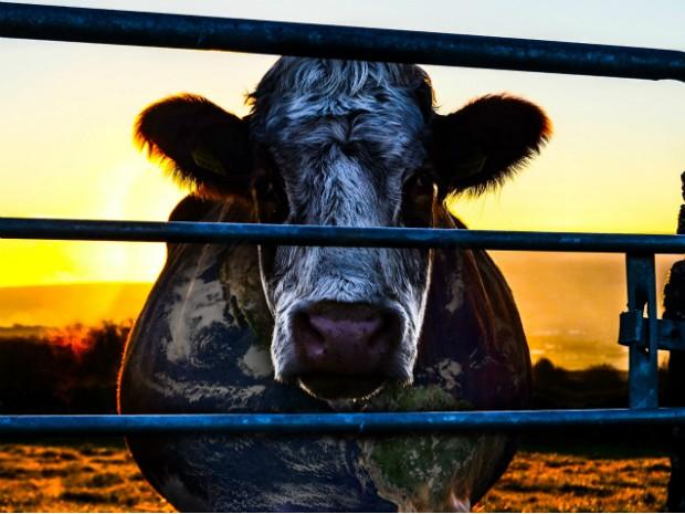Cowspiracy: O Segredo da Sustentabilidade (2014) (Foto: Divulgação / Cowspiracy)