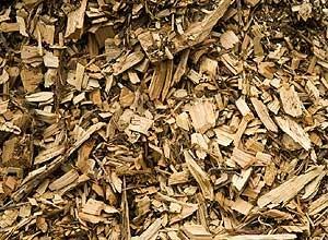 Resíduos orgânicos secos  Lascas finas de madeira (você pode conseguir com o marceneiro do seu bairro)  Folhas secas  Galho de árvore triturado ou quebrado em pequenos pedaços  Guardanapo usado (Foto: Casa e Jardim)