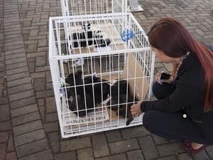 Cães e gatos serão colocados à disposição em evento de Boituva (Foto: Divulgação/Prefeitura de Boituva)