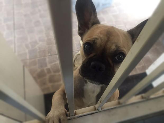 Projeto prevê detenção de até quatro anos para quem matar cães e gatos (Foto: Juliana Gorayeb/G1)