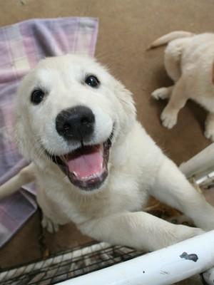 Sempre há espaço para melhorar, como fazer seu cãozinho mais feliz (Foto: SXC.HU)