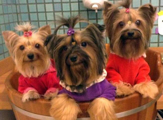Cães no pet shop em Juiz de Fora (Foto: Victoria Canine Boulevard Pet/Arquivo Pessoal)