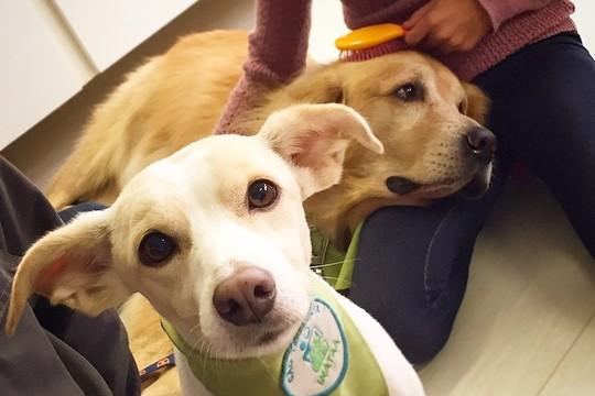 Os cães do Inataa (Foto: Divulgação)