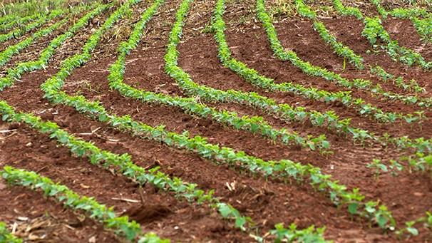 Produtores de soja do Oeste Paulista têm boa expectativa com a safra (Foto: Reprodução TV Fronteira)
