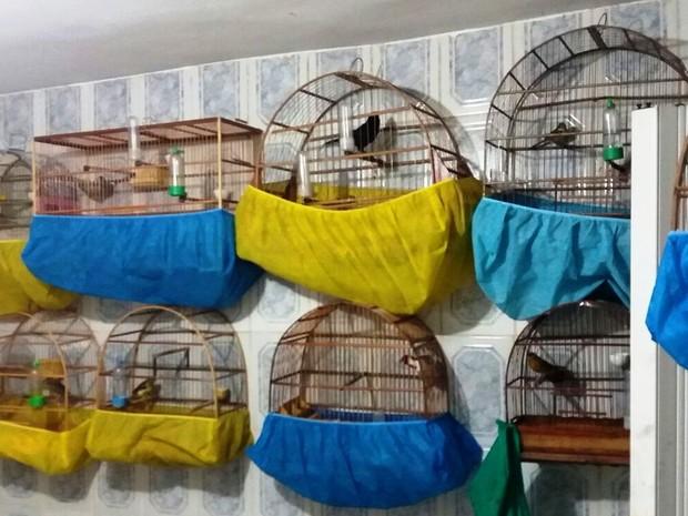 O morador mantinha em sua residência mais de 20 pássaros silvestres (Foto: Polícia Militar/Divulgação)