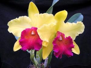 Mais de 50 espécies de orquídeas farão parte da exposição (Foto: Atua Agência/Divulgação)