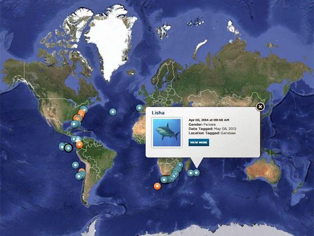 Mapa da organização Ocearch é possível ver movimentação de tubarões marcados em tempo real.  (Foto: Divulgação/Ocearch)