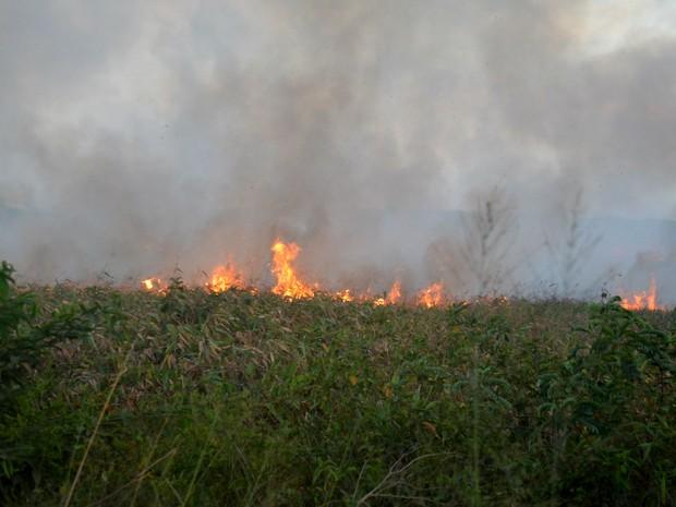 Queimadas teriam iniciado na manhã desta quarta-feira (9) segundo o Batalhão Ambiental (Foto: Jéssica Alves/G1)