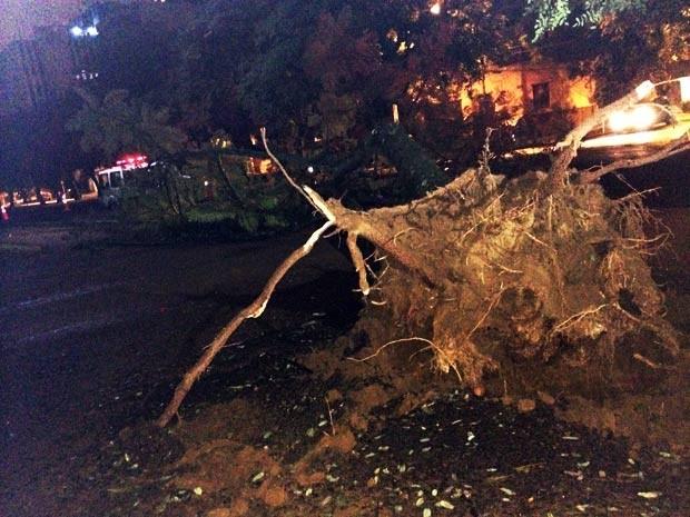 Árvore caiu durante a madrugada em Porto Alegre (Foto: Paulo Ledur/RBS TV)