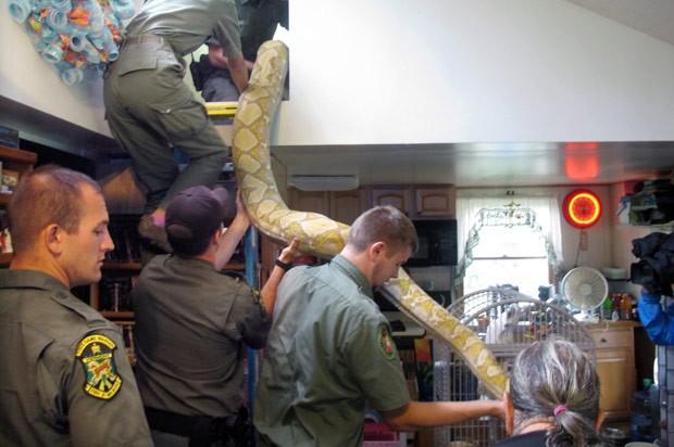 Pat Howard decidiu entregar cobras para as autoridades (Foto: Wilson Ring/AP)