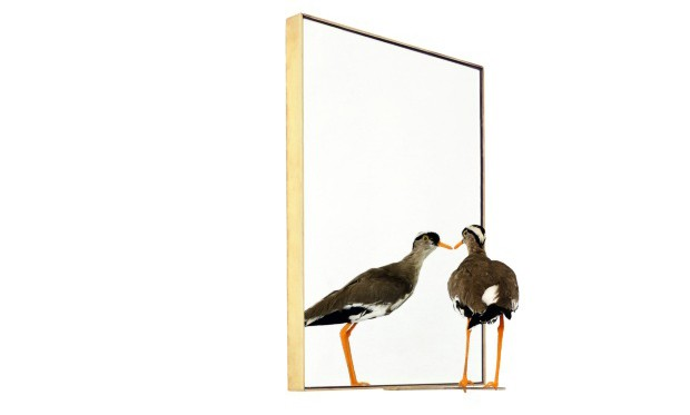 On the Edge Staring at Eternal Infinity, de latão e animal preservado em taxidermia, 33 x 48 cm, do artista chileno Sebastian Errazuriz (Foto: Divulgação)