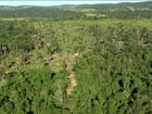 Área de proteção da mata do Jamanxim ainda é polêmica