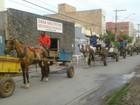 Em Montes Claros, carroceiros fazem protesto contra Projeto de Lei