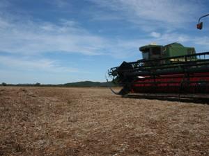 Campo de soja após colheita, em Sorriso (Foto: Leandro J. Nascimento/G1)