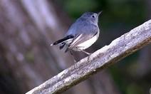 Observar e salvar aves nos EUA