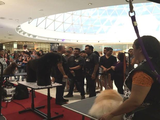 Concurso reuniu profissionais de tosa do norte e nordeste (Foto: Giana Mattiazzi/ TV Bahia)